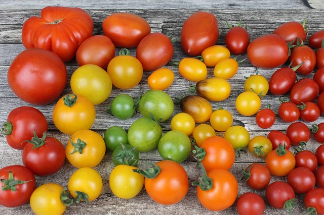 Collection of heirloom tomatoes in many different colors, shapes, and sizes.
